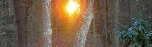 or_sunThruTrees